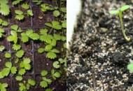 Как вырастить клубнику и землянику из семян