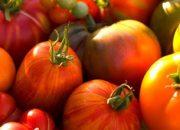 Cамые урожайные сорта томатов