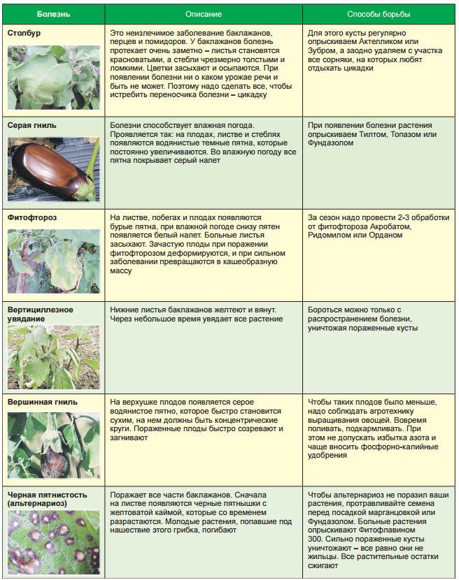 Сводная диагностическая таблица по баклажанам
