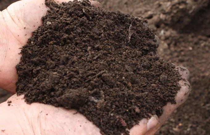 Рыхлая почва - залог успеха