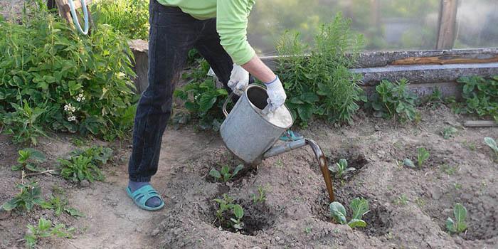Калина уход и выращивание защита от вредителей 17