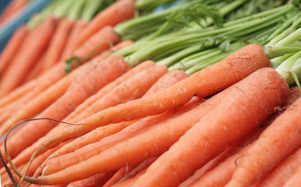 Как и какую морковь посадить в зиму правильно
