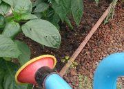 Чем подкормить перец во время цветения и плодонишения