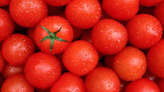 """Томат """"Бобкат"""" - урожайный сорт с устойчивостью к заболеваням"""
