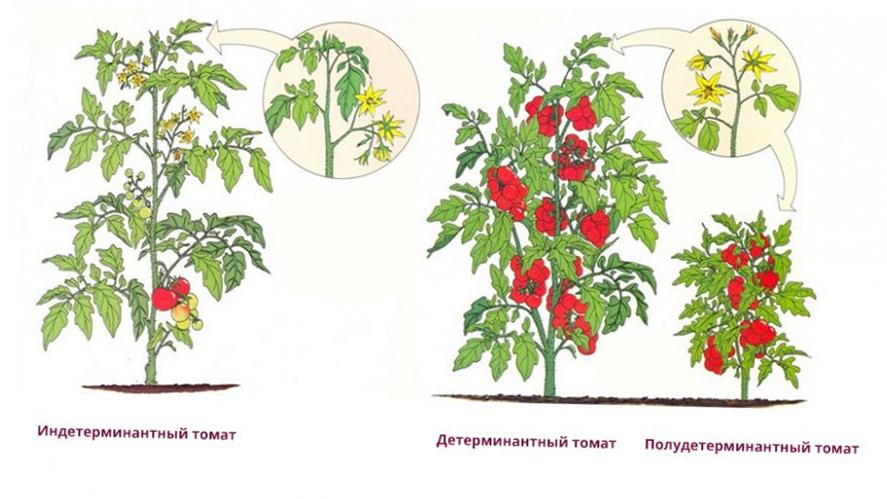 Когда пасынковать помидоры в теплице пошаговое фото