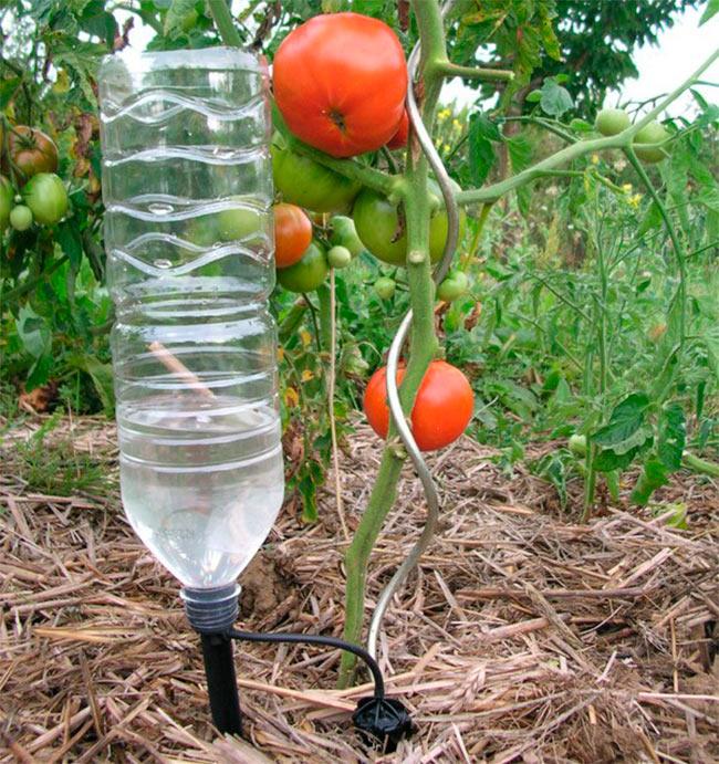 Капельный полив своими руками помидоры