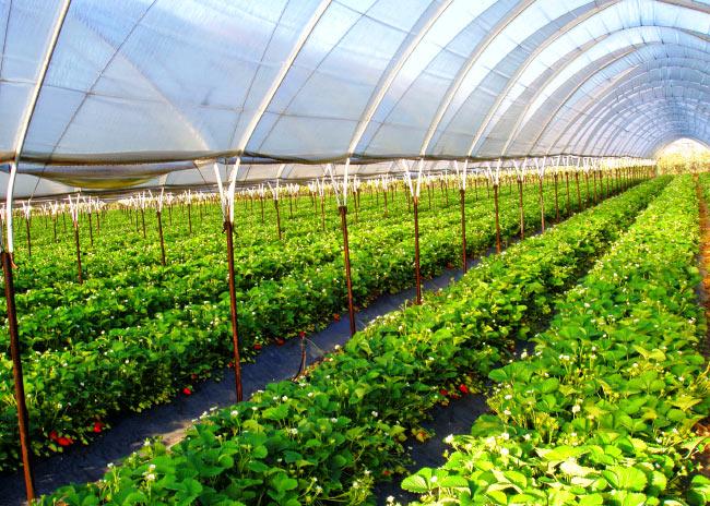 Бизнес план хозяйства по выращиванию плодовых деревьев 16