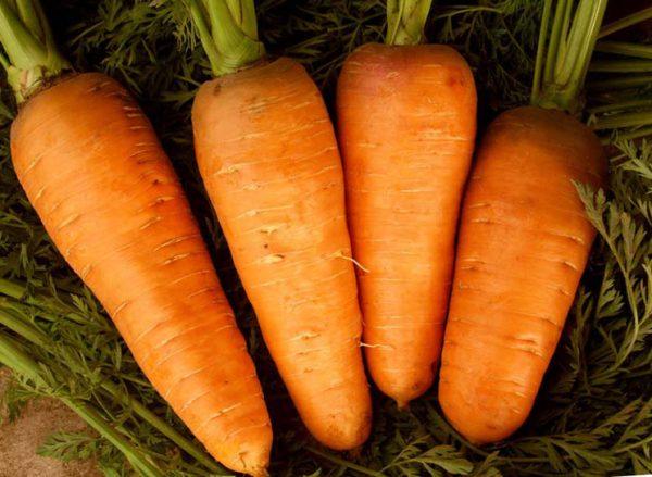 Морковь: посадка и уход в открытом грунтке