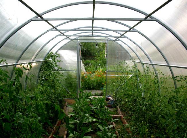 какие растения можно выращивать в одной теплице