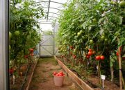 Как правильно садить помидоры в теплице: схема посадки 3х6