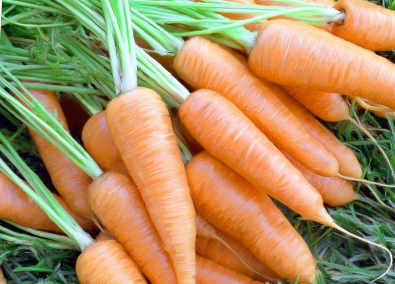 Морковь выращивание и подкормка 696