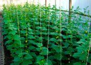 Лучшие варианты конструкций теплиц для выращивания огурцов