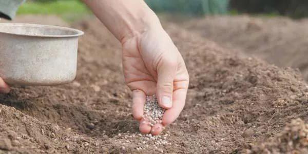 подготовка почвы для посадки кормовой свеклы