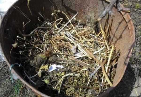 посадка огурцов в бочку фото пошагово