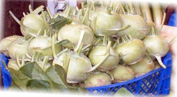 подготовка к хранению капусты кольраби