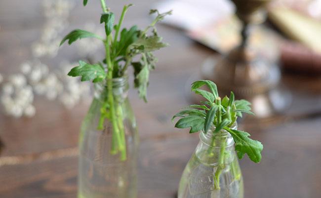 Роз, как вырастить хризантему из букета в домашних условиях