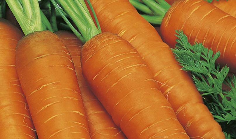 Бизнес на выращивании моркови 682