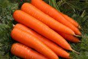 что посадить после моркови