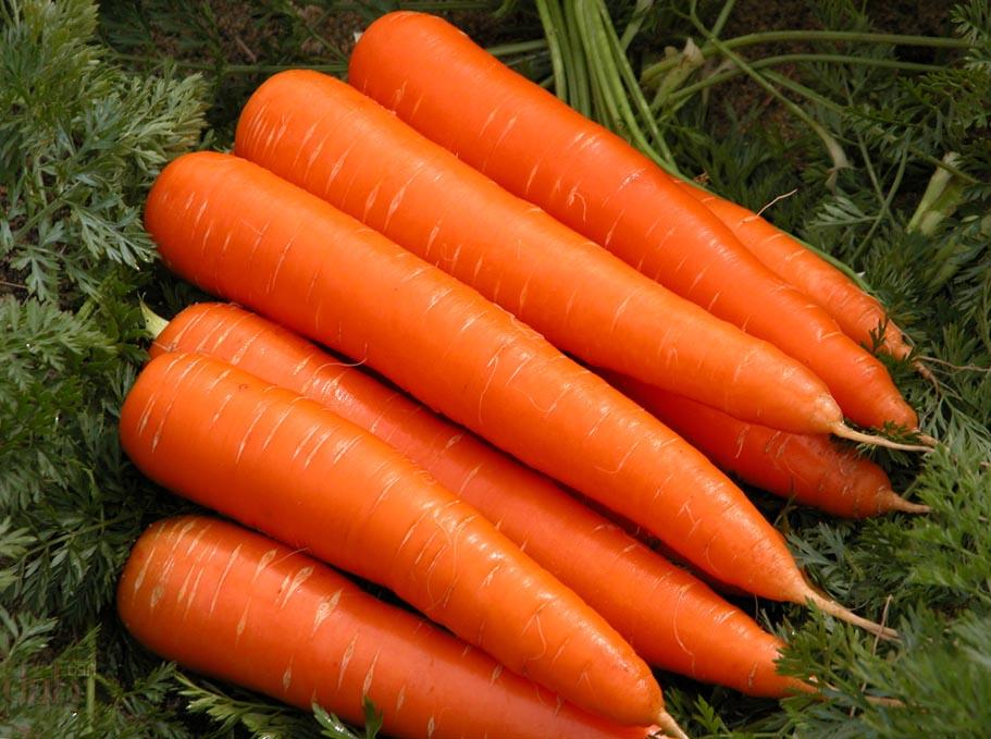 Посев и уход за морковью. - Фермер.Ру - Главный фермерский