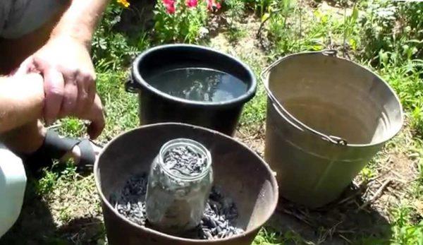 как удобрять золой кабачким