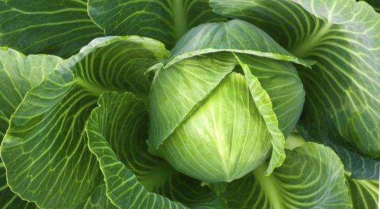 зачем обрывать листья у капусты