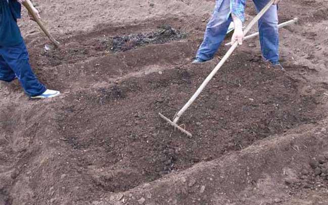 подготовка грунта перед посадкой