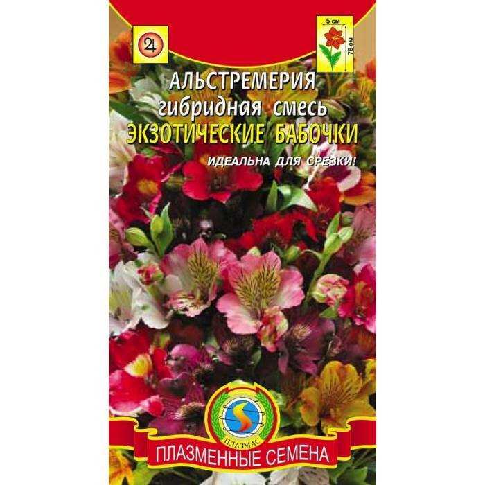 Альстромерия веселые мотыльки выращивание 27